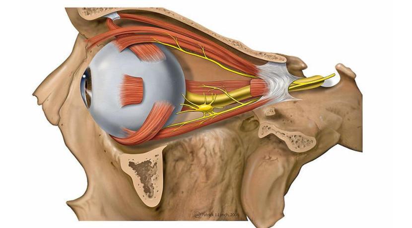 Google - Künstliche Intelligenz erkennt Krankheiten durch Augenscans